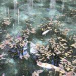 岐阜県関市「モネの池」はドローンで撮影可能?禁止事項まとめ
